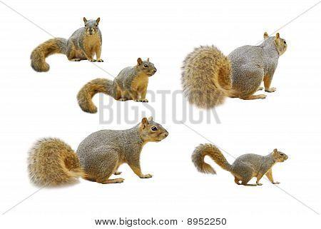 Multiple Squirrels