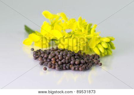 heap of Brown Mustard seeds and mustard flower