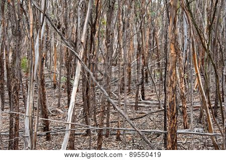 Mallet Thicket