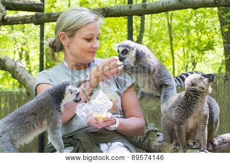 Feeding Lemurs