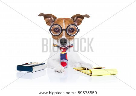 Secretary Accountant  Dog