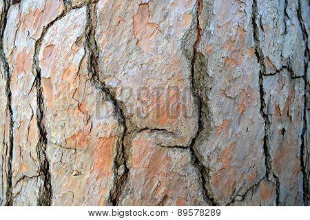 oak bark