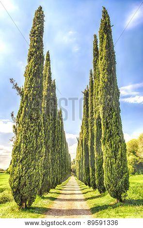 Cypress Alley At Villa Adriana (hadrian's Villa), Tivoli, Italy