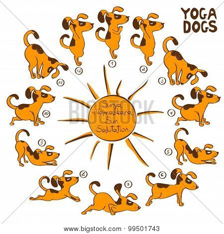 Dog Doing Yoga Position Of Surya Namaskara.