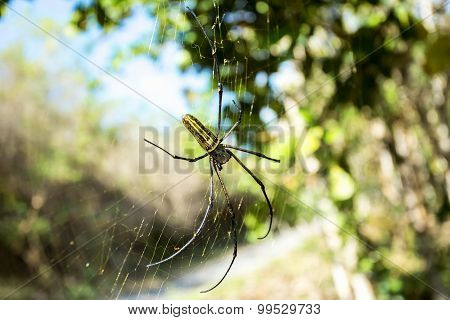 Nephila Pilipes, Big Spider, Bali, Indonesia