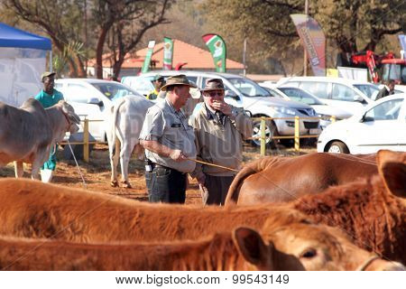 Dr. Peter Milton On Right, Judging Cattle At Championship.