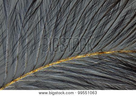 Bird Feather In Polarized Light