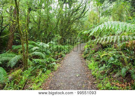 Path through Rainforest