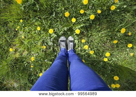 View Of Legs In Grass