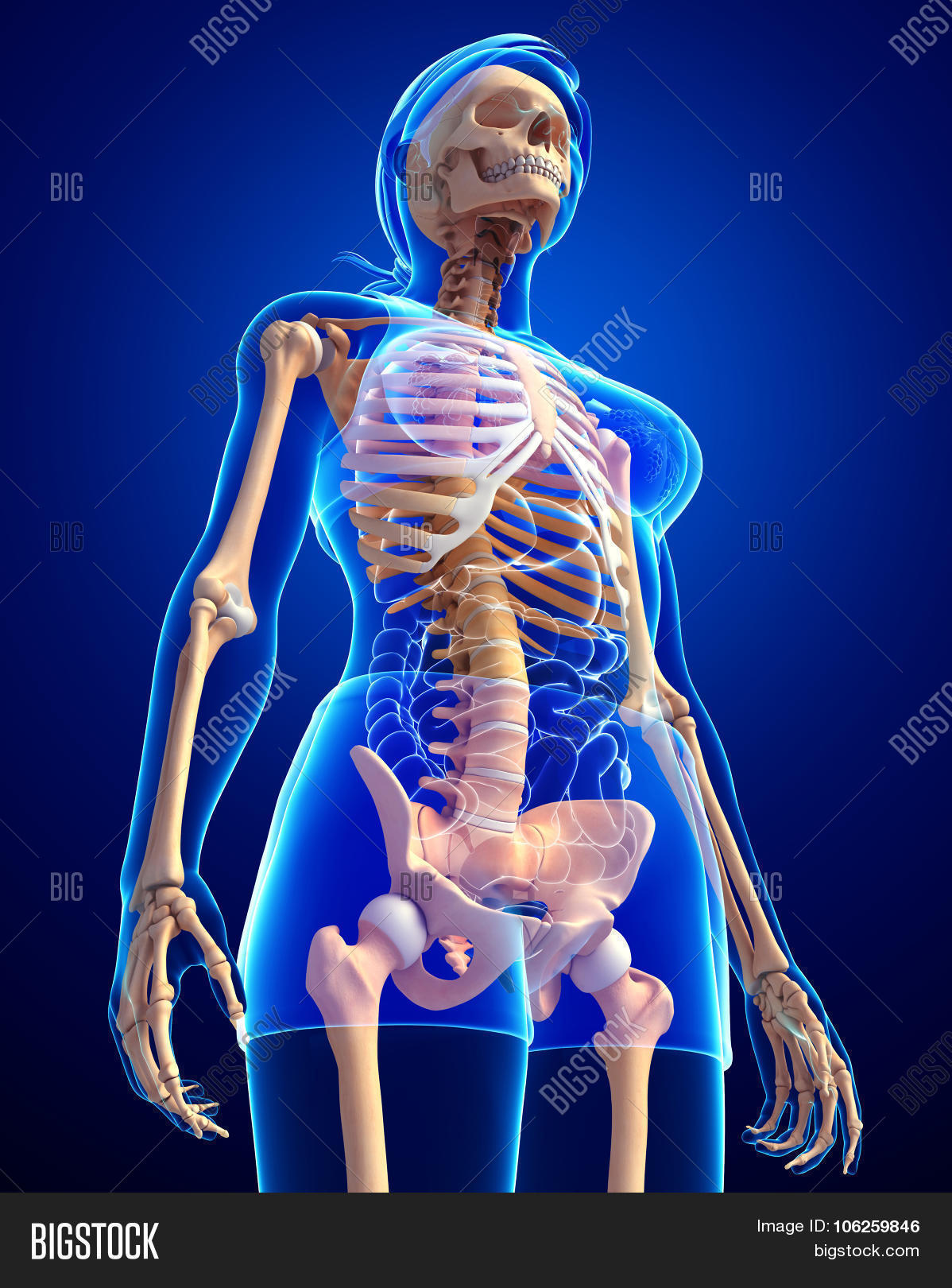 Human Skeleton Side Image Photo Free Trial Bigstock