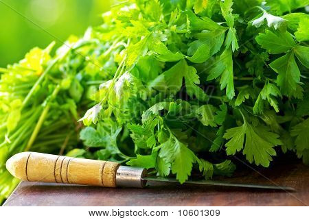 Green Cilantro And Knife.