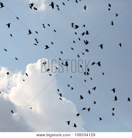 Silhouettes Of Crows In Sky