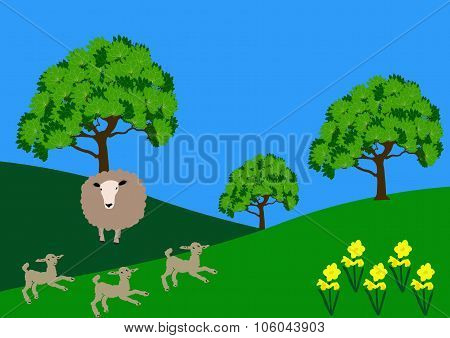 Spring Lambs In A Field