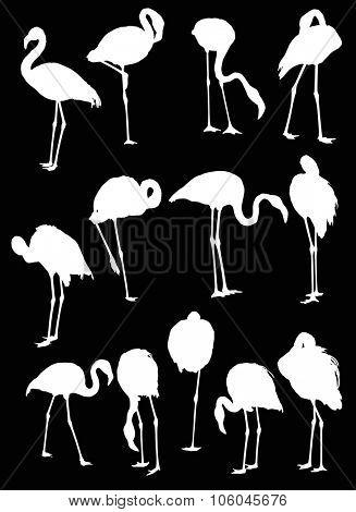 illustration with set of thirteen flamingo silhouettes isolated on black background