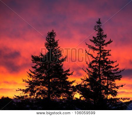 Trees Outlined Against Sunrise