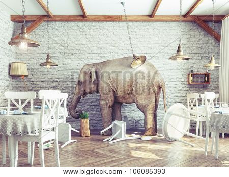 an elephant calm in a restaurant interior. photo combination concept