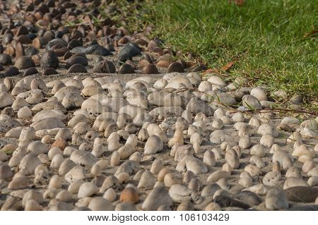 Mini Stone With Sunlight Bury On Cement Concrete For Decorate In The Garden,selective Focus