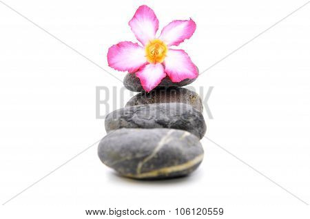 Zen And Spa Stone With Frangipani Flower Over White Background
