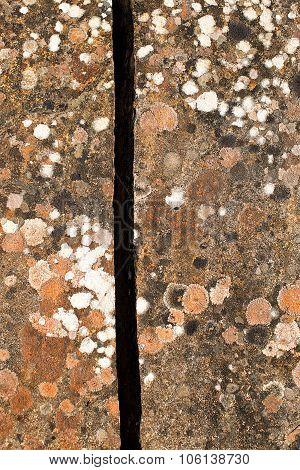 Multicoloured Lichen On Rock