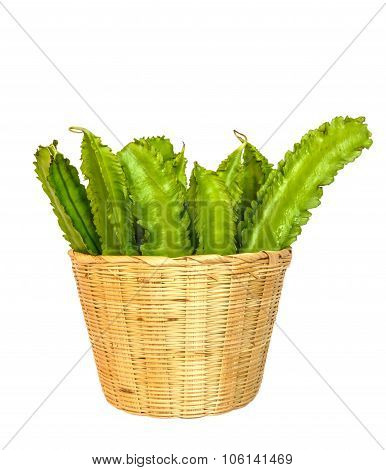 Winged Bean On White Background With Clippingpath