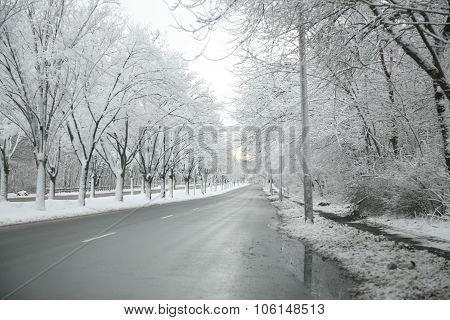 Snow covered tree lined street