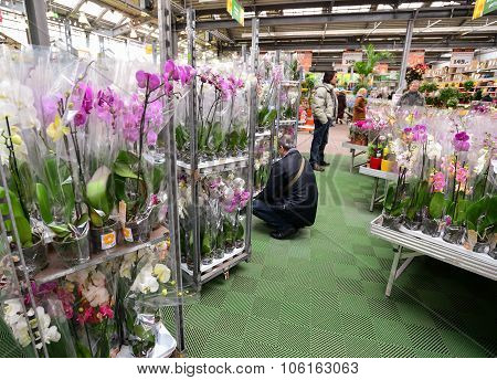 MOSCOW, RUSSIA - MARCH 04 2015: Orchids in OBI store in Moscow Russia. OBI is a German retail chain