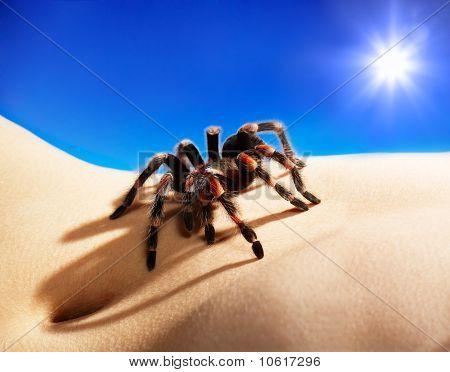 Spider On Body