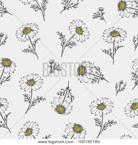Camomile hand drawn background