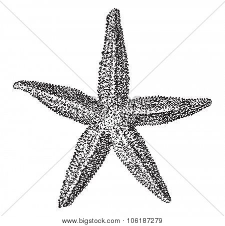 Starfish, vintage engraved illustration. Dictionary of words and things - Larive and Fleury - 1895.
