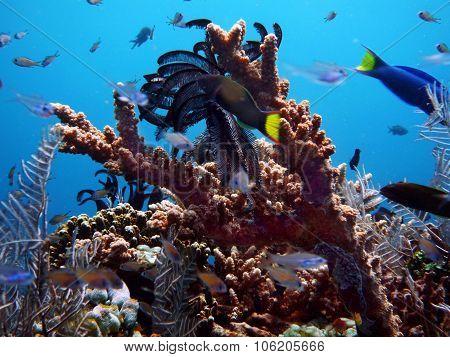 Reef Life Underwater Bali