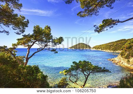 Elba Island Sea, Portoferraio Viticcio Beach Coast And Trees. Tuscany, Italy.