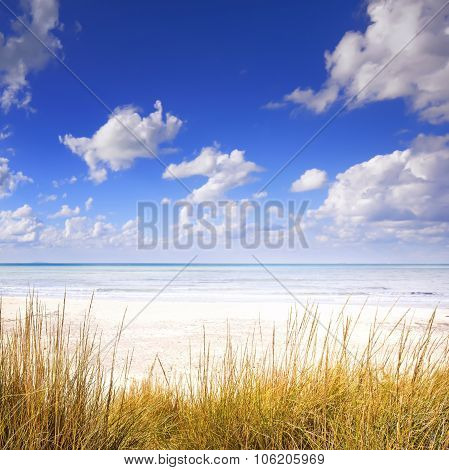 Grass On A White Sand Dunes Beach, Ocean And Blue Sky