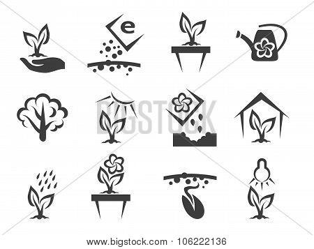 Plant and sprout growing vector icons set