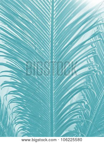 Abstract palm leaves pattern