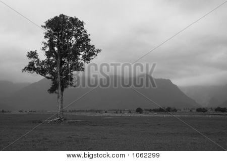 Tree Near Lake Matheson