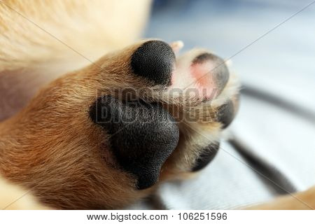 Dog's paw closeup