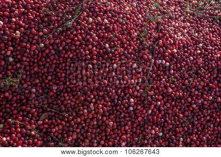 Mound of cranberries