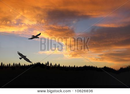 Eagles in flight at sunset