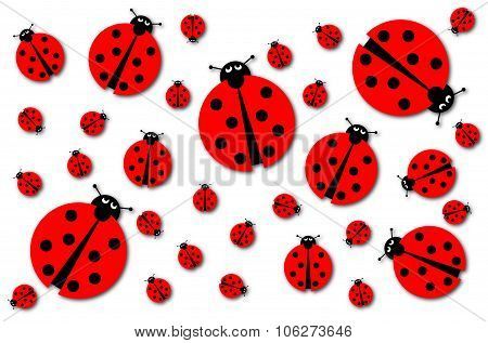 Many Ladybugs Shadows