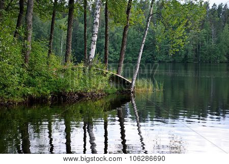 Forest lake.