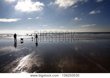 Dog Walking On A Beach In Winter