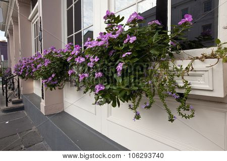 Impatiens cascade from window boxes in Charleston, South Carolina