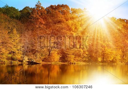 Autumn forest on the lake shore