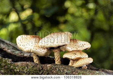 Spikey Mushrooms