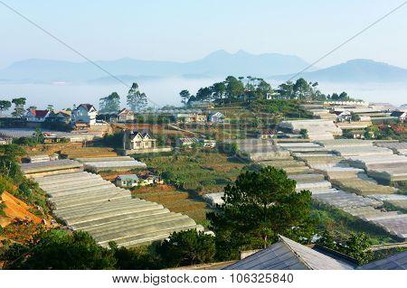 Floriculture Industry, Greenhouse, Effect, Dalat, Development