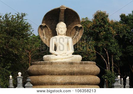 Budha With Tree Cobras