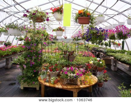 greenhouse plants and flowers indian garden farm bridgewater lunenburg county nova scotia canada poster