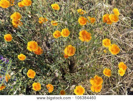 Flowers Near Montpellier (france)