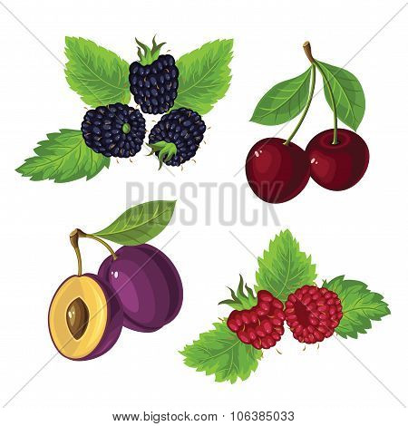 Berries with leaves