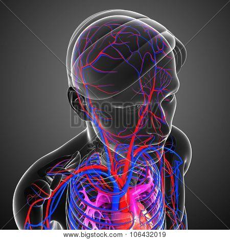 Brain Circulatory System